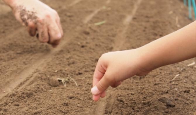 「種まきのお手伝い」のサムネイル