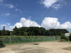 加藤農園 マスカット㉒