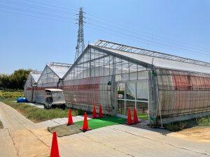 折原果樹園 ビニールハウス